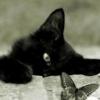 Siemano kumple - ostatni post przez Lazur
